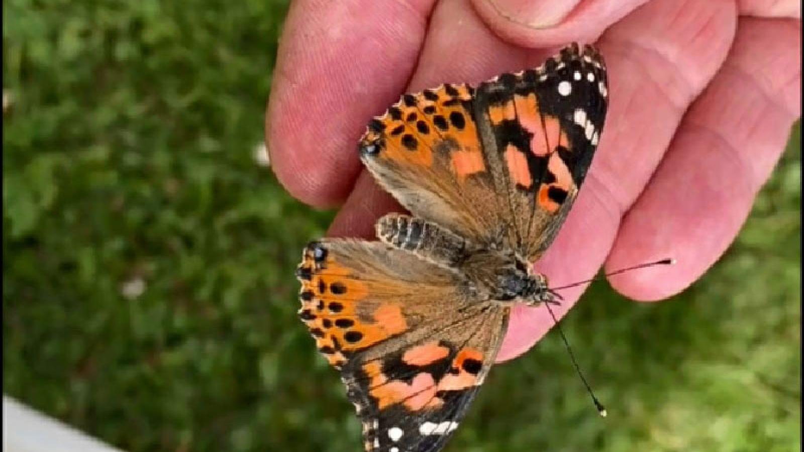 Annual Guthrie Hospice Butterfly Release